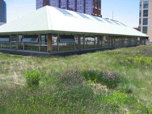 MEC green roof 2