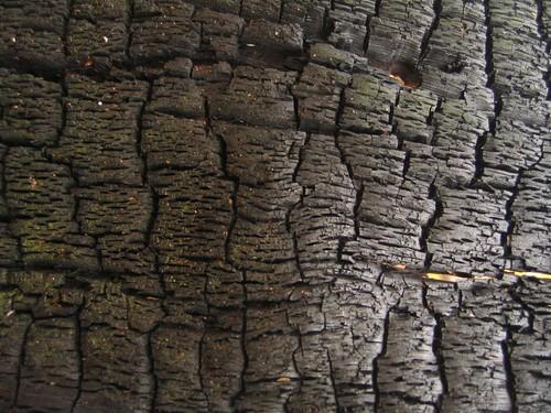 Tree bark macro shot
