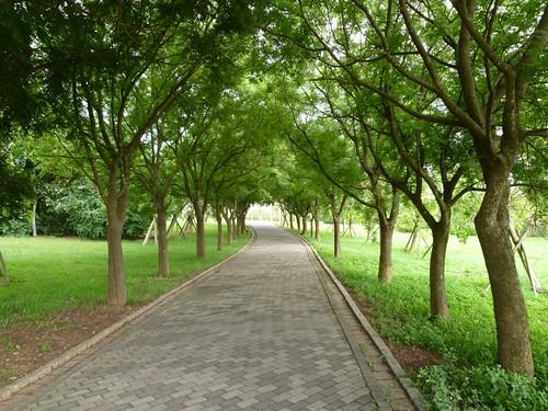 taichung-metropolitan-park-37