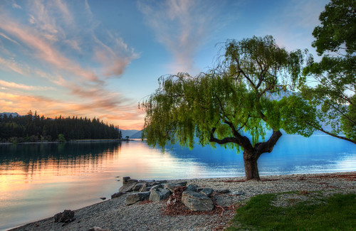 Tree at the Serene Lake