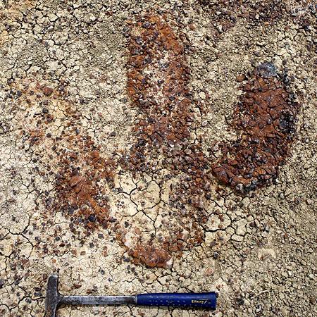 T-Rex Footprint