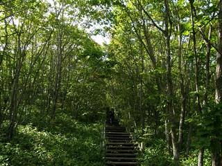 湿原展望台遊歩道