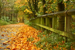 Fence (harry.1967) Tags: road uk autumn leaves fence 50mm golden track dof bokeh britain pov lancashire lane gb f18 greenfield ef50mmf18 andrewlee niftyfifty sooc canon400d focusman5 harry1967