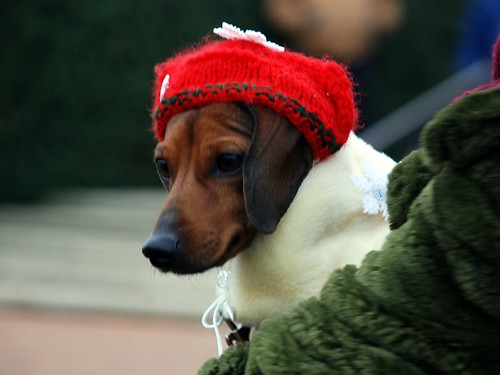 Reindog 12: A good hat never goes out of style