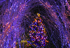 Ready for Christmas (joka2000) Tags: christmas color photoshop lights multiple yokohama yamato ukaitei