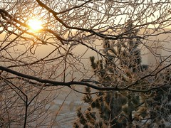 Good Morning, Jena! Good Morning, Flickr! (Linda6769) Tags: above winter sun building tree tower pine architecture sunrise germany town thringen haze ast branch hoarfrost jena thuringia twig below sonne baum baretree raureif sonnenstrahlen conifer thuringian zweig nadelbaum jentower konifere explored eastgermanarchitecture koniferenimwinter nackterbaum coniferinsnow