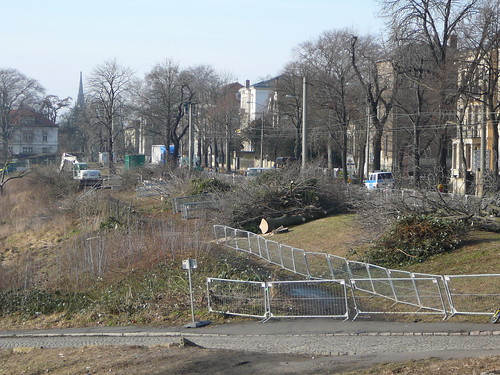 Baumfällarbeiten an der Bautzner Straße (12)