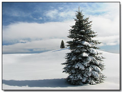 Another Snowy Tree! (Lisa-S) Tags: blue winter shadow sky white snow ontario canada tree clouds canon bravo lisas allrightsreserved invited themoulinrouge caledon firstquality s3is canons3is abigfave platinumphoto flickrplatinum superbmasterpiece megashot 7364 proudshopper thegardenofzen getty2009 soldongetty escarpmentsideroad copyrightlisastokes getty20090324
