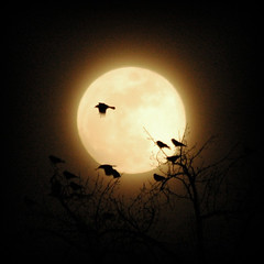 corvid moon (Lenscap) Tags: moon night fullmoon crows ravens