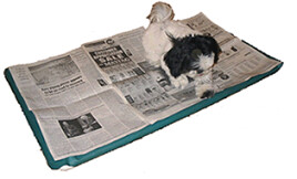 dog on newspaper