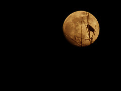 Moon shadow (James Jordan) Tags: shadow moon bird night wow gold golden full lunar blueribbonwinner platinumphoto anawesomeshot diamondclassphotographer
