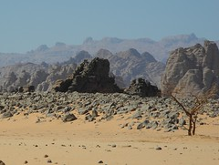 Chad Tibesti NE (ursulazrich) Tags: tschad chad ciad tchad sahara desert tibesti rocks basalt mountains acacia aridity drought volcanismus geology geologie trockenheit dürre