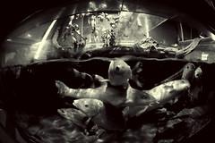 Fishlegs (weirdoldhattie) Tags: ilfracombe aquarium fish fisheye samyang8mm bw black white monochrome