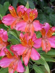 S5031454 (Ian Faz) Tags: flowers plants tress nessgardens