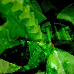 Life Machine (Full Metal Photographer) Tags: green water composite leaf surrealism machine surreal gear drop droplet surrealist organic fineartphotography inorganic kellyhoffart