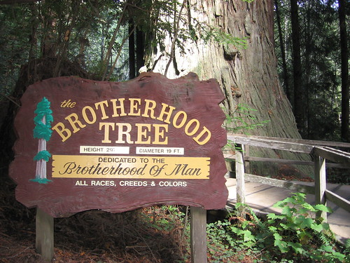 Brotherhood Tree