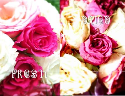 freshdriedRZ