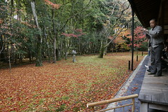 Kotoin 高桐院