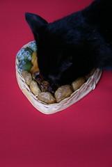 Bean and Xmas Fruits (Mrcia_Marton) Tags: christmas xmas cat kat chat bean gato katze gatto goldstaraward