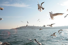 Boids (kaare.iverson) Tags: ocean travel sea sky cloud bird water turkey seagull istanbul favourite bosphorous hoizon