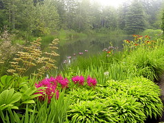 Dreamy landscape (Ani1967) Tags: plant canada flower tree green nature water fog forest landscape botanical pond flora scenery quebec dream foggy amateur horticulture gaspsie naturesfinest gaspepeninsula jardinsdemtis refordgardens golddragon weatherphotography colorphotoaward diamondclassphotographer theunforgettablepictures natureoutpost worldwidelandscapes natureselegantshots alemdagqualityonlyclub