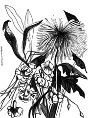 No 38 Dahlia (Nu Scot) Tags: dahlia white black flower monochrome pen botanical sketch ebay drawing auction line domestic household carnations cutflower dailydraw2008 newyearproject
