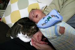猫と赤ちゃんと父