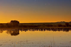 Moonlit Serenity Over Bosque (Fort Photo) Tags: longexposure sunset sky orange bird nature birds animal night stars landscape star geese nikon glow nightscape dusk wildlife birding trails cranes moonlit bosque ave moonlight nm ornithology bosquedelapache avian afterdark sandhillcrane eveing nwr d300 mywinners aplusphoto diamondclassphotographer flickrdiamond brillianteyejewel