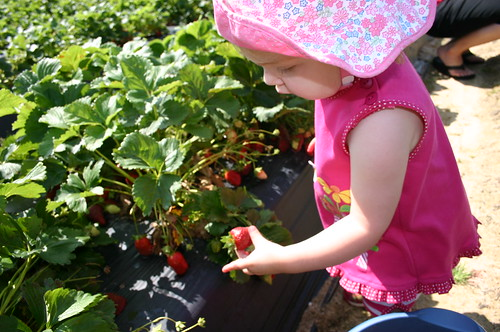 Anna Picking strawberries
