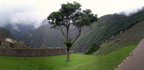 pano of Machu Picchu tree