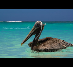 The pelican (Patassini Alessandro) Tags: blue sea wallpaper sky beach water beautiful canon eos photo high mare dominican republic foto shot image photos dominicanrepublic blu quality pelican cielo ap punta dominicana resolution alta bella hq cana acqua domingo spiaggia santo alessandro scatti immagine repubblica immagini pellicano risoluzione repubblicadominicana 400d apphotos abigfave aplusphoto hqwallpaper avianexcellence diamondclassphotographer flickrdiamond theunforgettablepictures patassini alemdagqualityonlyclub alemdaggoldenaward highresolutionalta