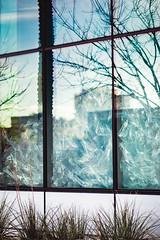 20170209-JHenryNesting-02 (cityoflasvegasPIO) Tags: art artexhibit artwork cityhall firststreet flockflockflock gallery jenniferhenry lasvegas nesting nevada vegas sylvester collier