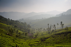 Green view (Karthikeyan.chinna) Tags: karthikeyan chinnathamby chinna canon canon5d canon5dmarkiii nature travel green wide landscape hill hillstation tea teaestate estate valley mist fog dof layers india ooty tamilnadu southindia south scenery