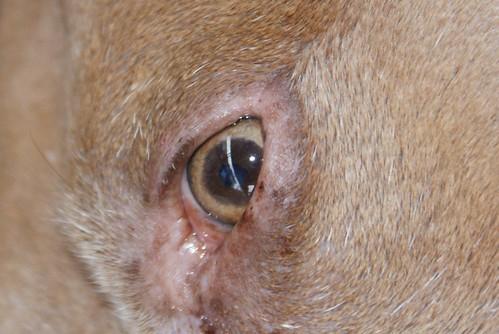Nala's Eye
