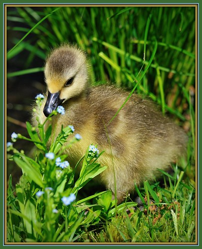 Natures Spring Birth...