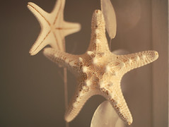 (.onthemoon) Tags: starfish