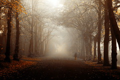 Bellahouston_walker.jpg (Andy Welsby) Tags: park morning trees winter mist nature fog autum glasgow avenue mosspark bellahouston anawesomeshot