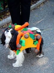 taco dog (istolethetv) Tags: dog photo foto image awesome snapshot picture taco photograph gothamist   tompkinssquarepark dogcostume halloweendogparade dogwearingclothes halloweendogcostume tacocostume 17thannualtompkinssquarehalloweendogparade halloweencostumesfordogs