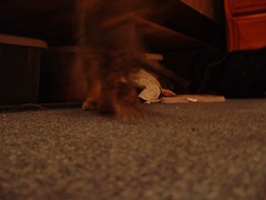 DSCF1234 (fadingembers) Tags: animals stormy kitties bigpurplehouse