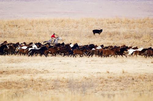 gathering mares 032
