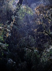 Fairy-Tale Forest (TravelingFio) Tags: india film wet forest rainforest slidefilm scanned westbengal elitechrome100 kodakelitechrome100 singalila singalilanationalpark