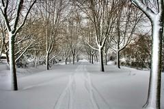 Snow Path (newagecrap) Tags: winter snow bikepath wisconsin senic kenoshacounty pleasantprairie snowpath newagecrapphotography