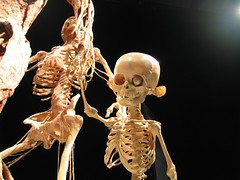 Muscleman with Skeleton and Child (T bias) Tags: museum exhibit science bodyworlds cadaver plastination beefjerkey