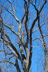 Good Climbing Tree
