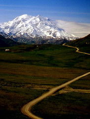 Mt. McKinley, Alaskan Gold, Denali  National Park (moonjazz) Tags: denali alaska biggest path road wilderness wild snow peak mtmckinley mountain north summer vast huge mighty supreme field tundra adventure marvel gaze behold creation magnificent splendor wonder best highest travel photography landscape