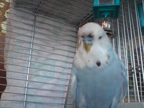 This is maaaaaa cage !