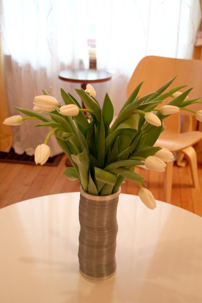 Tulips in a Slinky Vase