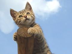 little man up high (*LINNY *) Tags: sky pet animal closeup cat kitten kitty littleman puss 30faves 40faves mywinners