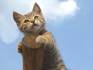 little man up high