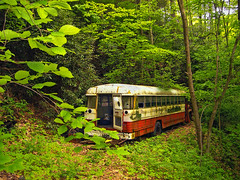 Bus Stop (Nicholas_T) Tags: abandoned forest spring pennsylvania creativecommons deciduous lehighvalley dilapidated northamptoncounty uppermountbetheltownship